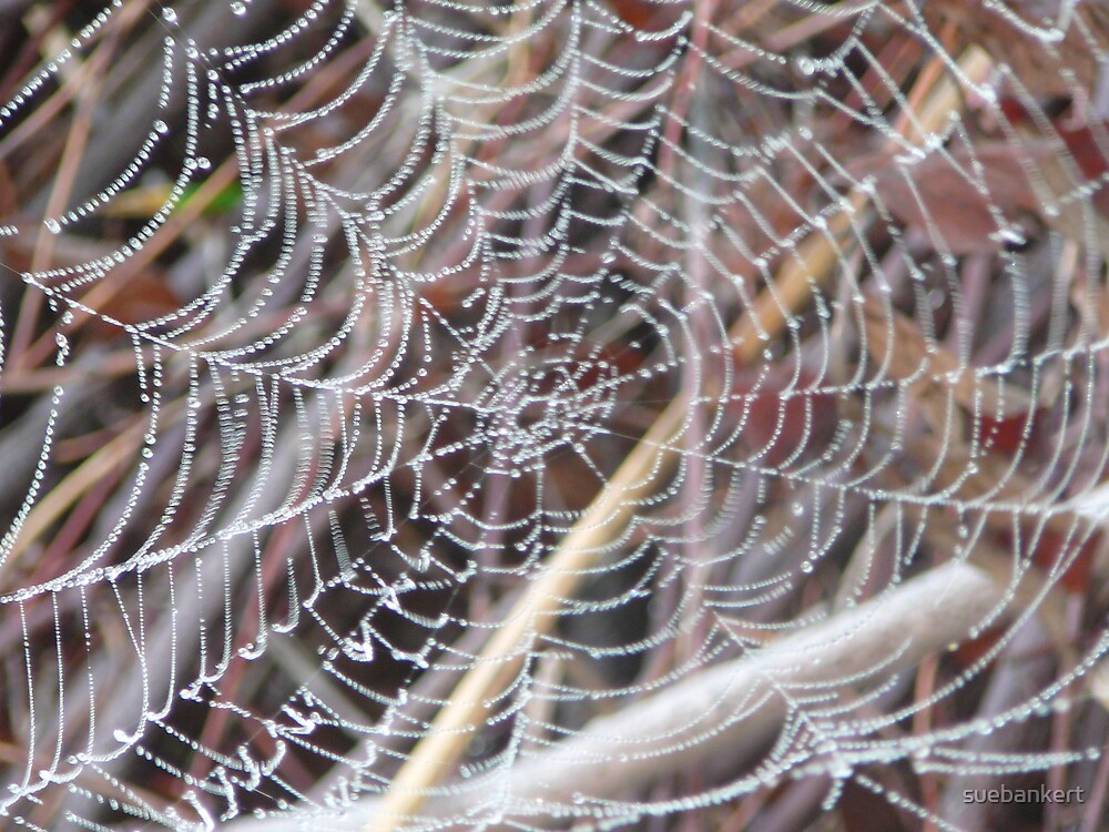 Dewy Web by suebankert