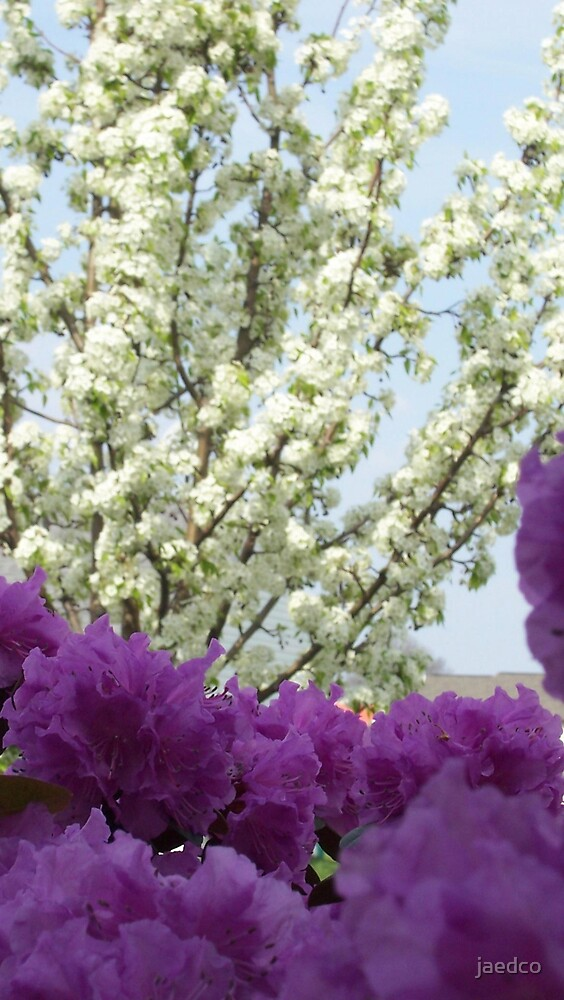 Flowers and Pear Tree by jaedco