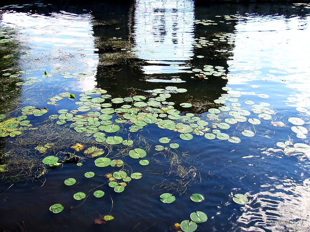 Lily Pads by Summer369