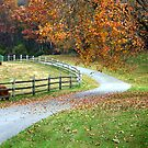 Country Autumn by BethBernier