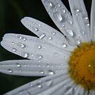 daisy by wildflowers