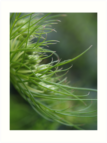 fennel plant by wildflowers