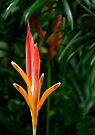 Bird of Paradise by Dave Lloyd