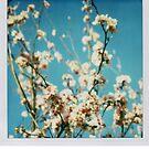 white flowers by bluecitrusart