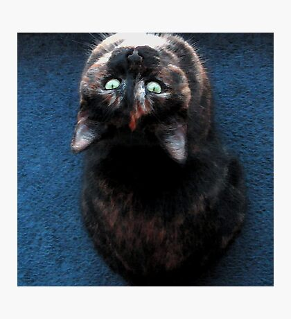 Calico Upside Down Photographic Print
