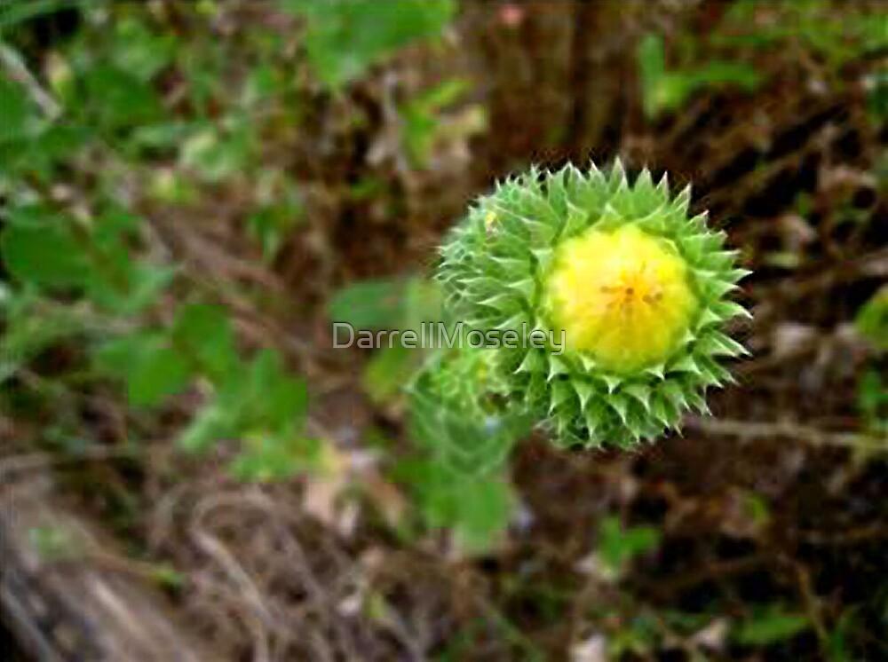PRICKLEY LITTLE THING! by DarrellMoseley