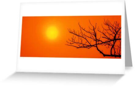 Sun by zeebuzz