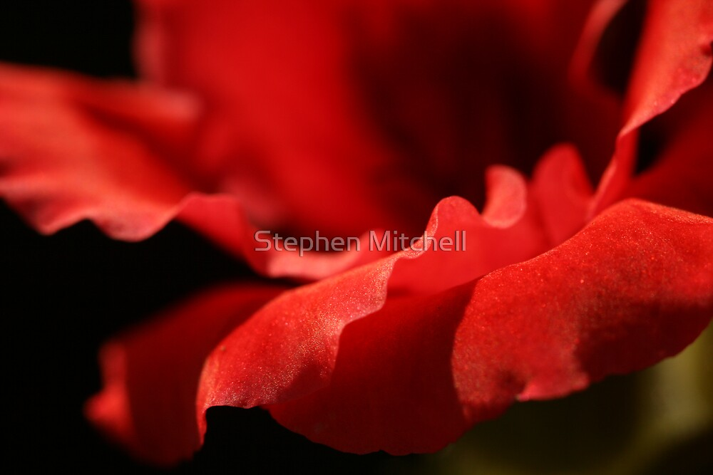 Spanish Dancer by Stephen Mitchell