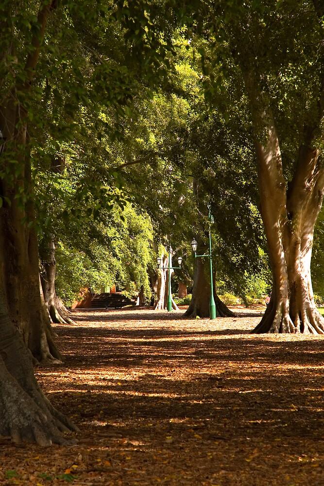 Shady Path, Brisbane Botanical Gardens by Judy Harland