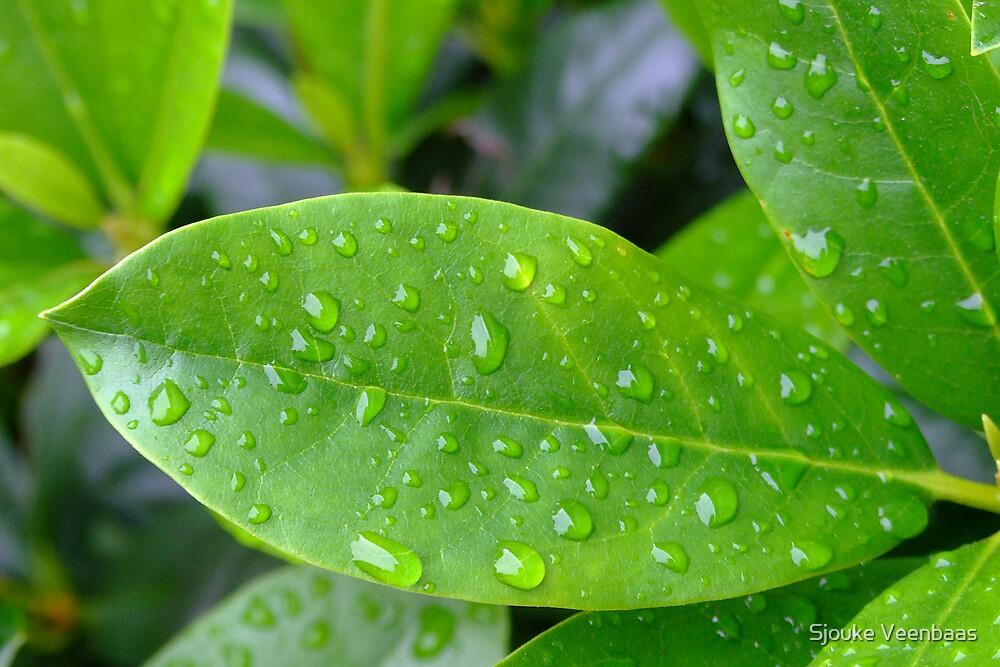 Green leaf with waterdrops by Sjouke Veenbaas