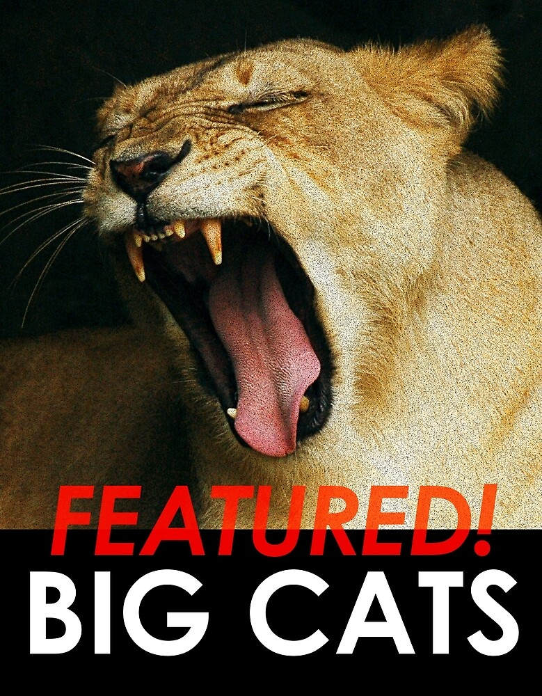 Big Cats Feature by toffeespin
