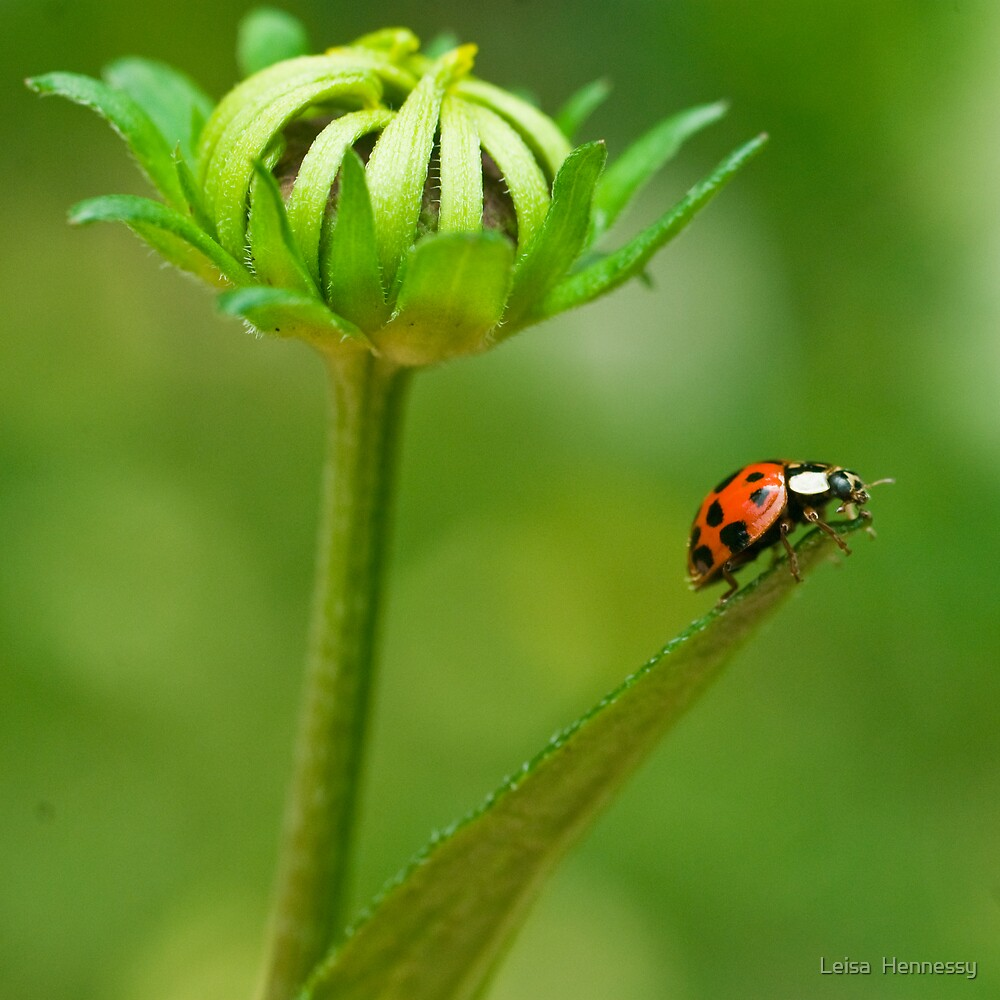 LadyBird by Leisa  Hennessy