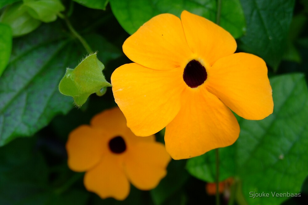 """Orange """"Susan with beautiful eyes"""" by Sjouke Veenbaas"""