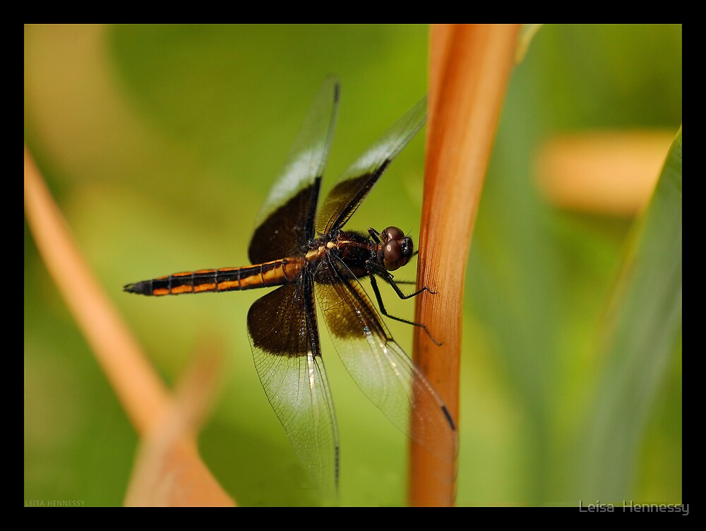 Dragonfly by Leisa  Hennessy