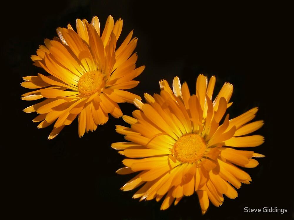 Floating flowers by Steve Giddings