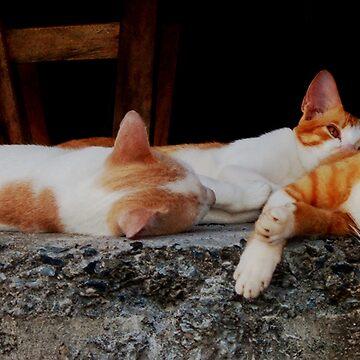 Cat Nap by men4breakfast