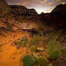 Zion Sunset by Nick Johnson