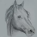 Horse Sketch by lizdomett