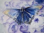 Butterfly Blues by Marsha Woods