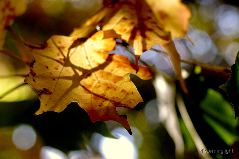 Leaf with Shadows by discerninglight