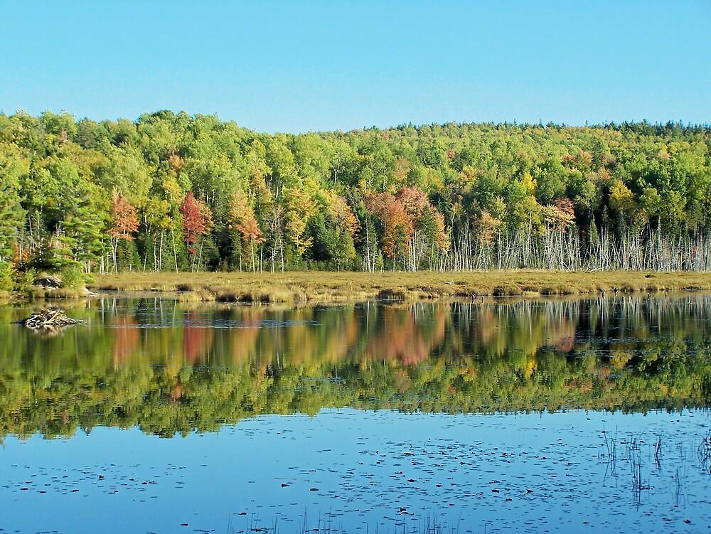 Reflected Shore by Gene Cyr