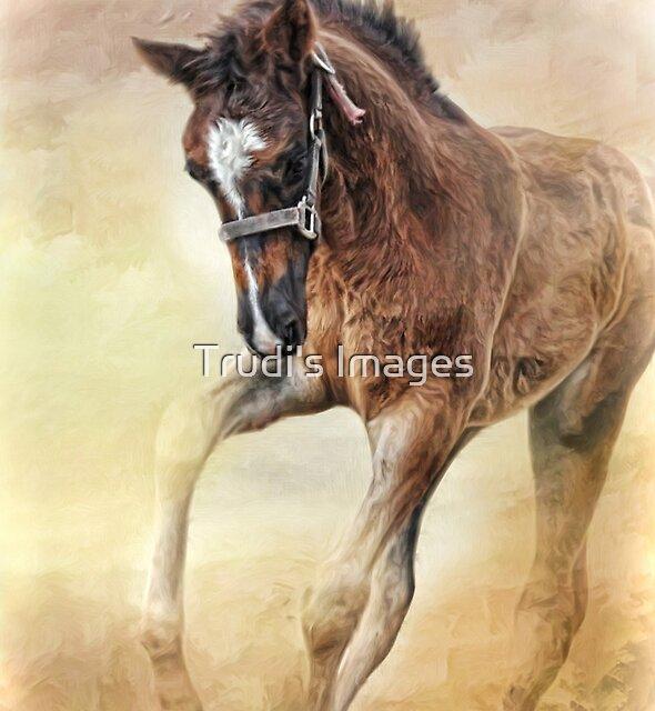 Just Juniper by Trudi's Images