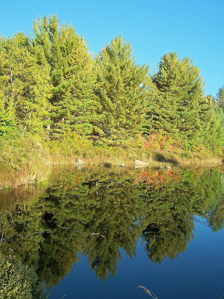 Reflected Spruce by Gene Cyr