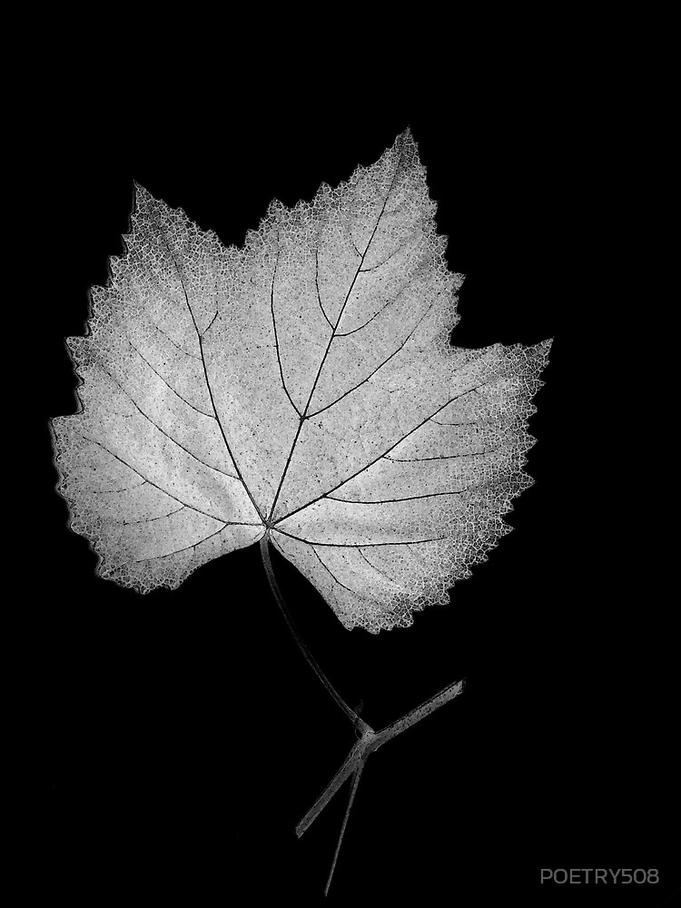 Grape Leaf by POETRY508