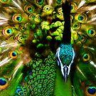 Portrait of a Peacock by BethBernier