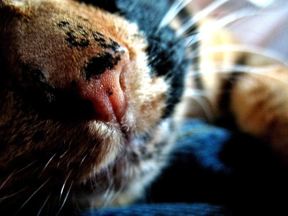 Nala's Nose by Tommy Seibold