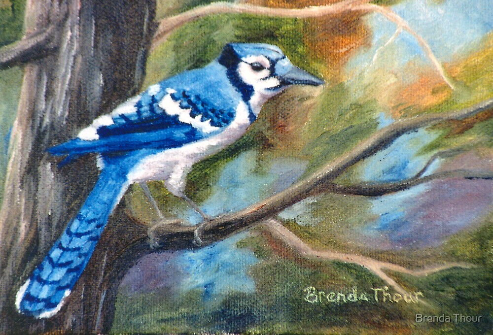 Blue Jay by Brenda Thour