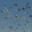 Fly Away by Levi Buzolic