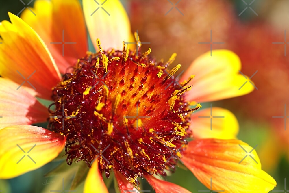 Sunny Blanket Flower by Joy Watson