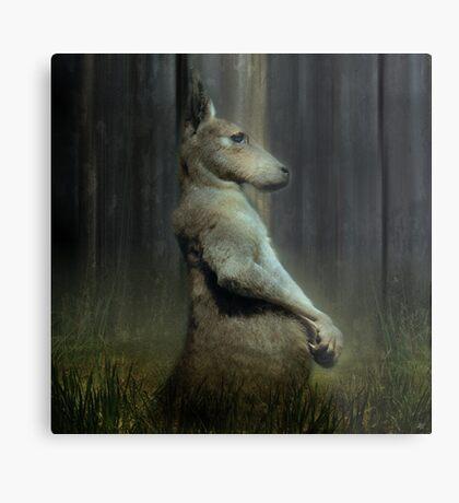 Portrait of a Kangaroo Metal Print