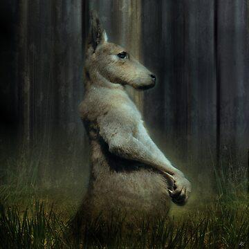 Portrait of a Kangaroo by paul