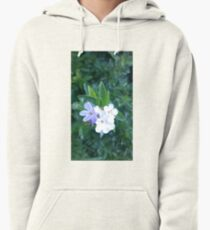 flower blossoms in nature Pullover Hoodie