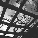 Branching Out by artbyeri