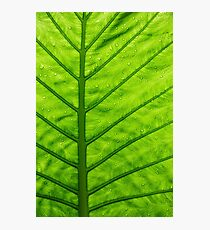 Green ecological concept, green leaf close-up Photographic Print