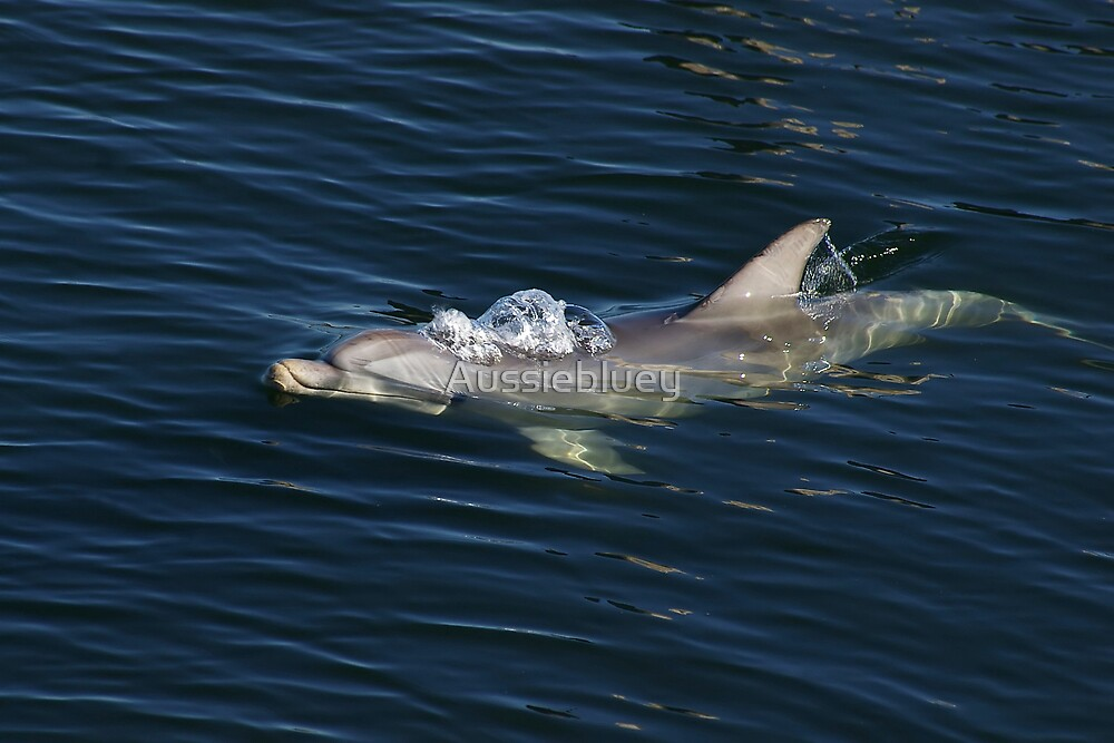 Dolphin by Aussiebluey