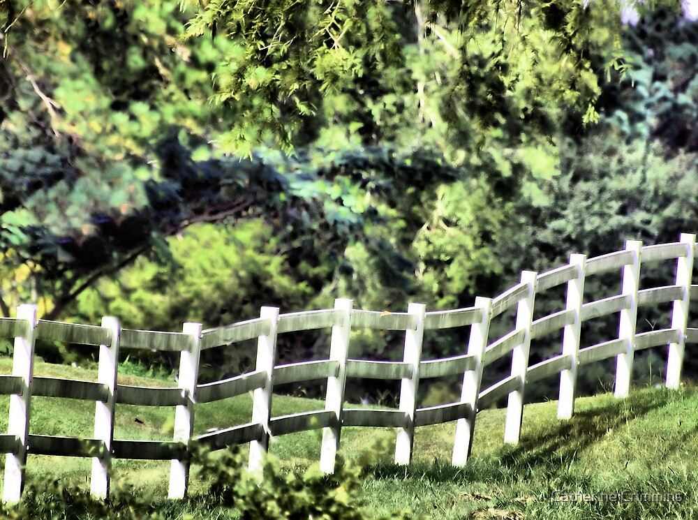 little white fence by Catherine Crimmins