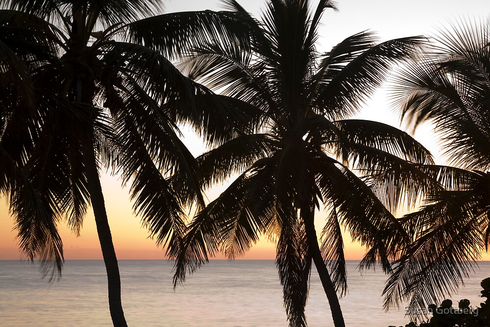 Palms Silhouette by Susan Gottberg
