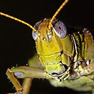 Grasshopper 2 ! by robkal