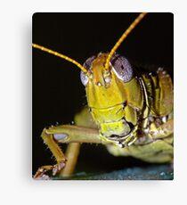 Grasshopper 2 ! Canvas Print