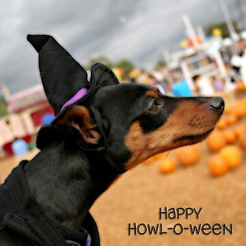 Happy Howl-O-Ween by BGPhoto