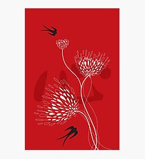 Oriental Black Swallows With Chinese Calligraphy 'Xin' (Heart) and White Dandelion Flower Blooms On Red Photographic Print