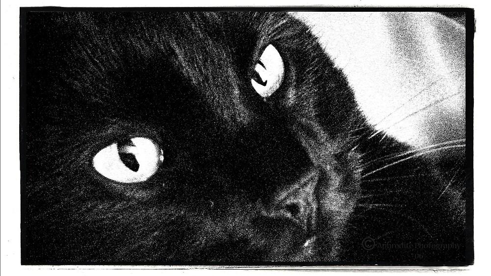 chat noir by JetsetAphrodite