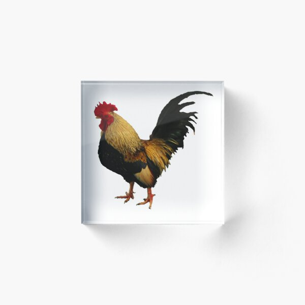 Temple Rooster ~ Acrylic Block
