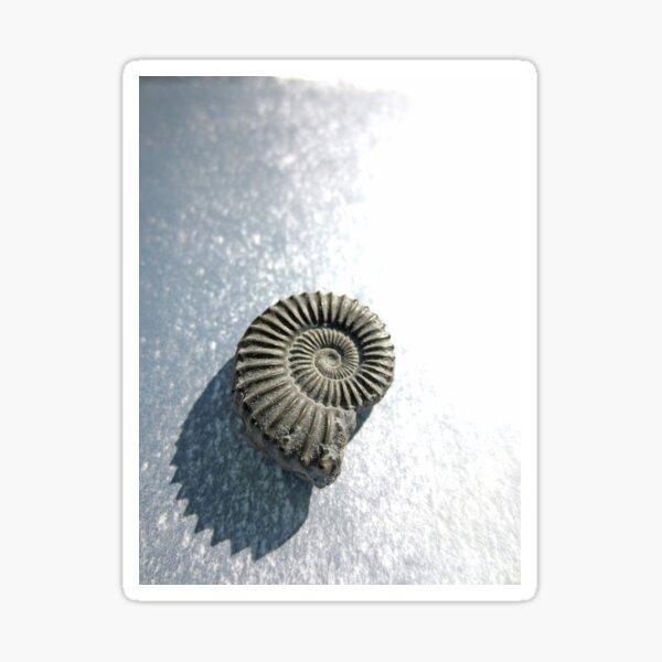 Ammonite II Sticker