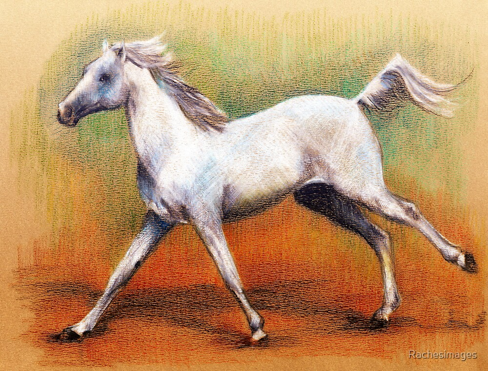 Galloping grey by Rachesimages