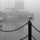 Seagull by awefaul